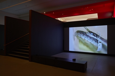 Sriwhana Spong, having-seen-snake (2016). 16mm transferred to HD video. 13 min 45 sec. Exhibition view: <em>a hook but no fish</em>, Govett-Brewster Art Gallery, New Plymouth (12 May–22 July 2018). Courtesy the artist and Michael Lett, Auckland; Govett-Brewster Art Gallery, New Plymouth. Photo: Samuel Hartnett.