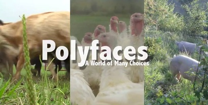 Poster for <em>Polyfaces</em>